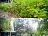 MOL_Gradina Botanica