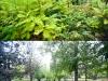MOL_Gradina Botanica2