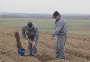 CEZ_Romania_Plantare_2013