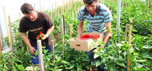 Cora Bacau - Fundatia fara- legume bio 1