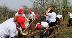Baia Mare voluntariat EON 2