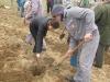cez-group-plantare_arbori
