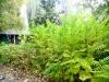 MOL_Gradina Botanica00