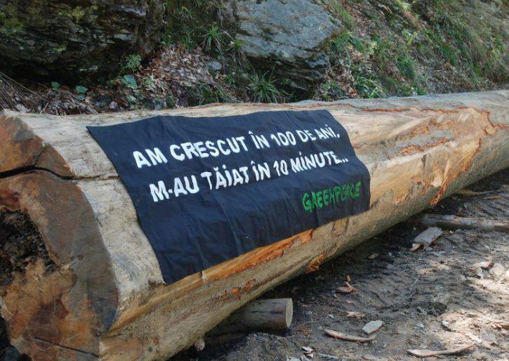 Greenpeace_Harta_Taierilor_de_paduri_2012