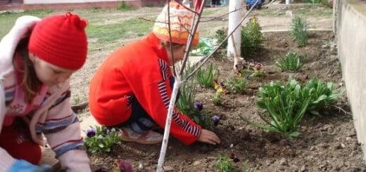Plantari_Lafarge_2012