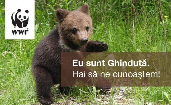 Ghinduta_WWF_Bucuresti_Mall