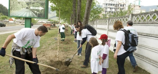 Carpatcement_Plantare_Ziua_Voluntarului_Tasca_Neamt_0-2013