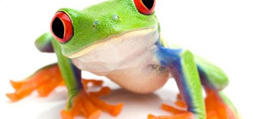 green frog deloitte