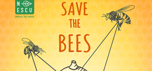 Kaufland -Ateliere de apicultura_Save the bees