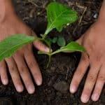 Nestlé sustine tranziția către un sistem alimentar regenerativ